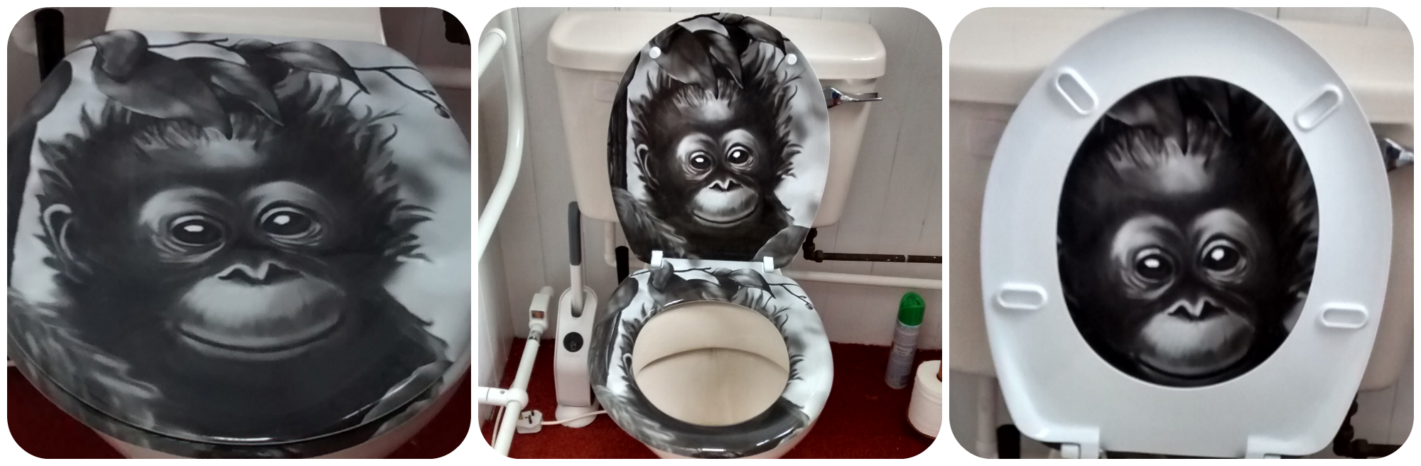 Travelling around England for a year from a Cambridge home with a monkey toilet.